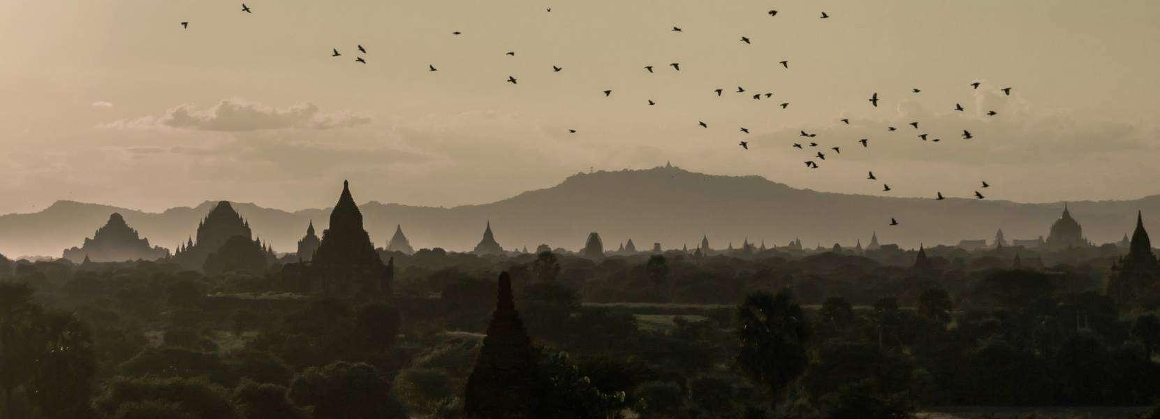 bagan myanmar birds