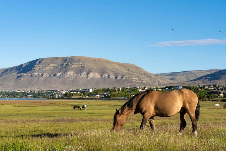 chevaux el calafate patagonie argentine blog vincent voyage