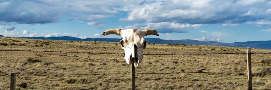 tête animal patagonie argentine blog vincent voyage