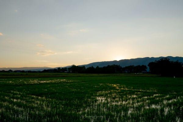 Coucher de soleil dans les rizières du lac inle au Myanmar Birmanie