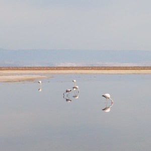 los flamencos atacama salar Desert d'Atacama au Chili | Blog Vincent Voyage