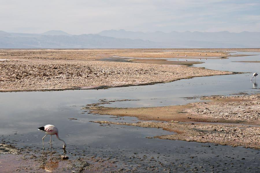 salar los flamencos Desert d'Atacama au Chili | Blog Vincent Voyage