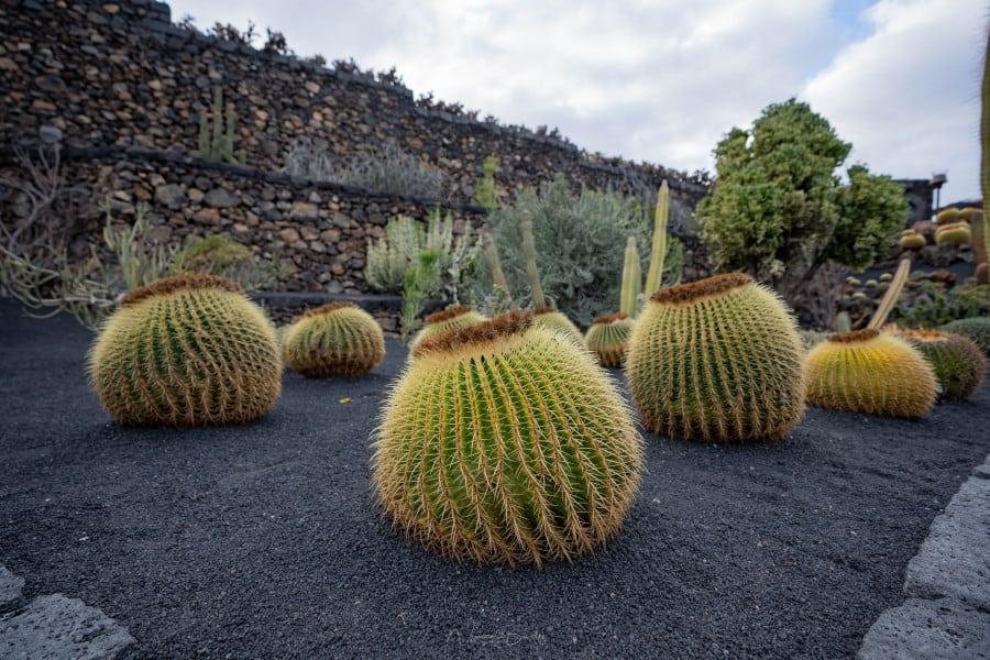 Le jardin de cactus à Lanzarote dans les iles Canaries