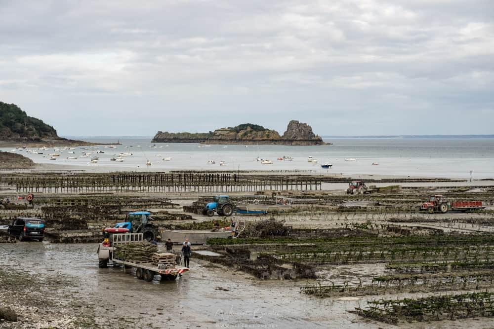 Les huitres de cancale en Bretagne