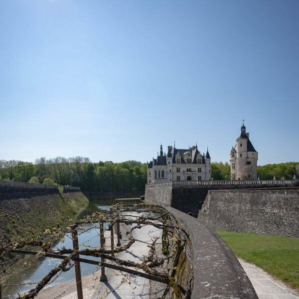 les vignes du château de chenonceau