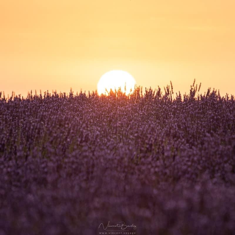 coucher de soleil à valensole