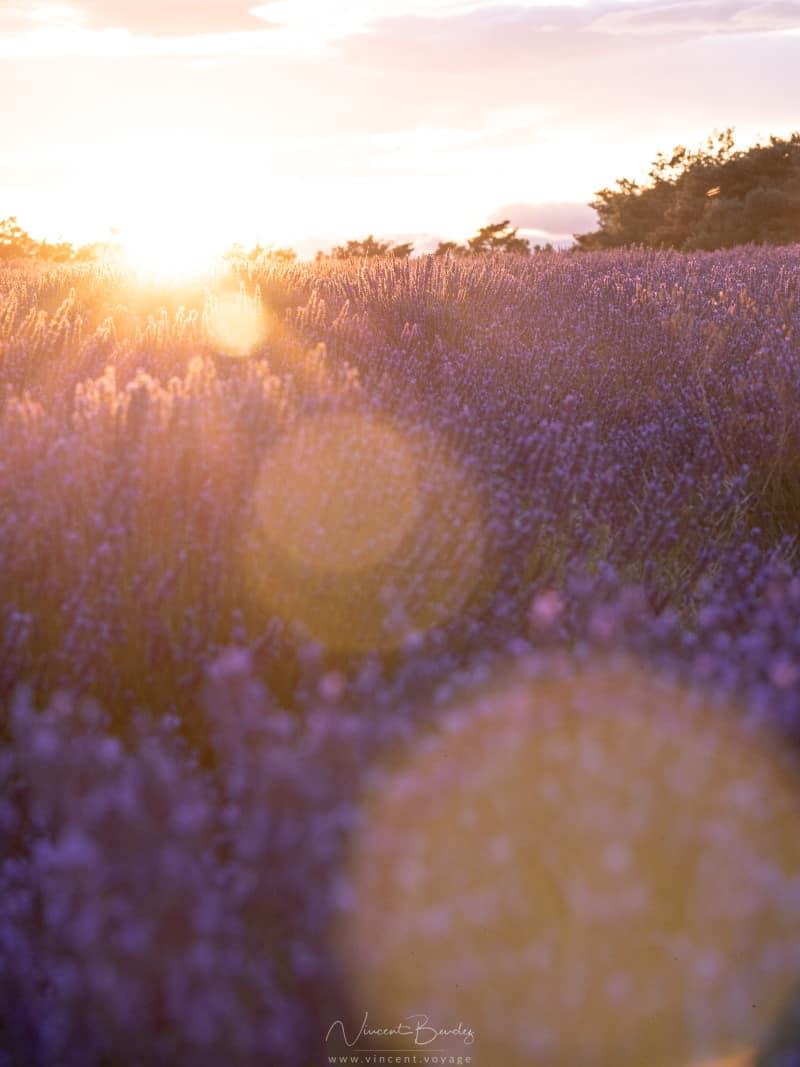coucher de soleil valensole