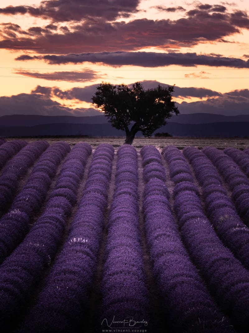 coucher de soleil champs de lavande Angelvin Valensole