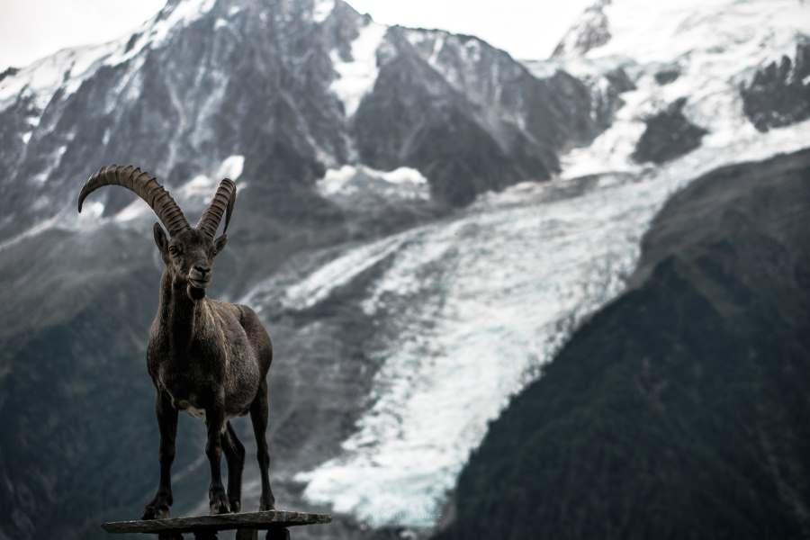 parc merlet glaciers chamonix | Blog Vincent Voyage