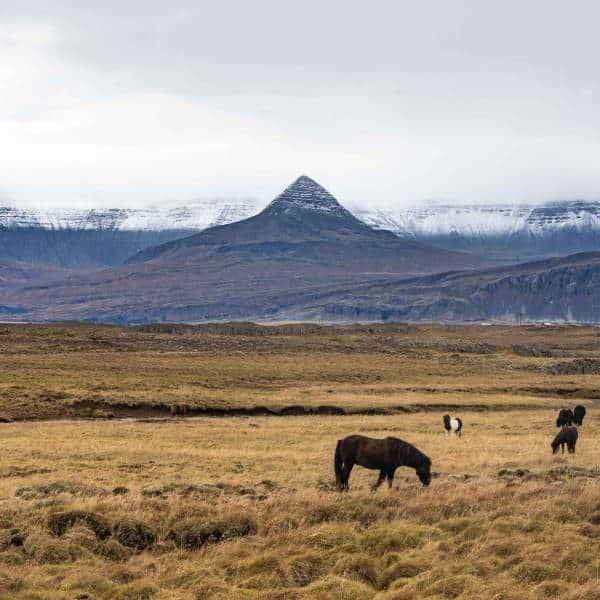 chevaux islande montagnes nature | blog vincent voyage