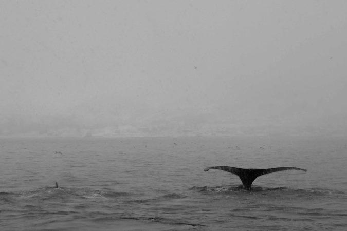 observation baleines tromso Norvege blog vincent voyage