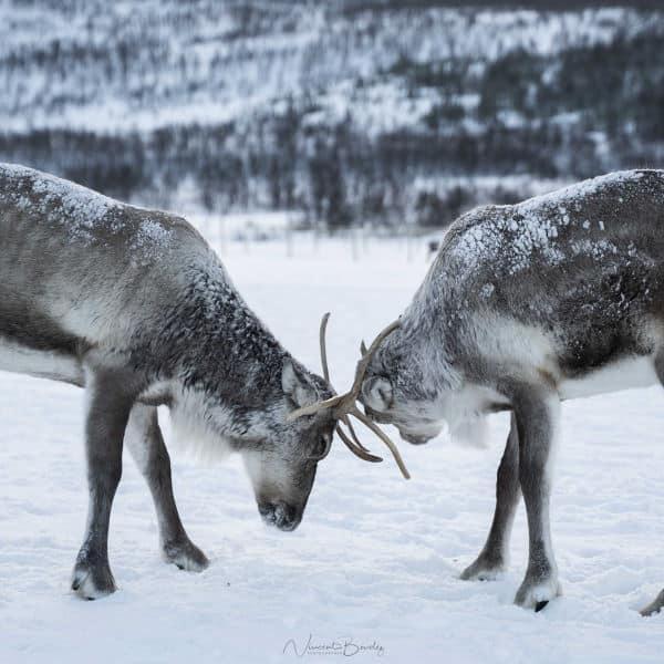 rennes laponie tromso norvege blog vincent voyage