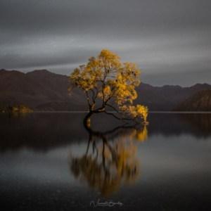 Plus belles photos wanaka tree arbre en Nouvelle Zélande | Blog Vincent Voyage