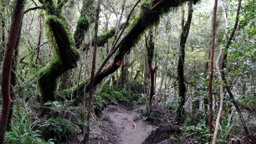 Randonnée tongariro foret chemin photo | Blog Vincent Voyage