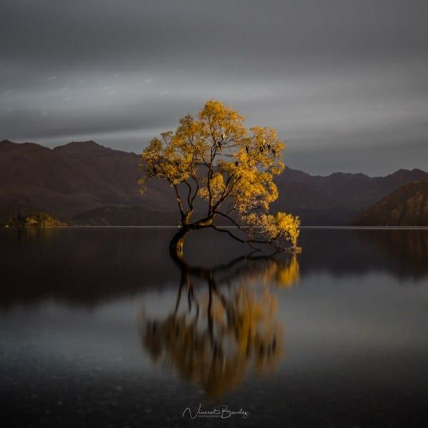 découvrir photo Wanaka Tree Nouvelle Zelande | Blog Vincent Voyage
