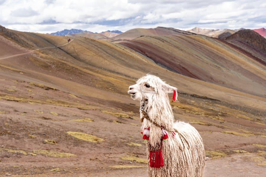Montagne colorée Palcoyo au Pérou lama à Cuzco | Blog Vincent Voyage