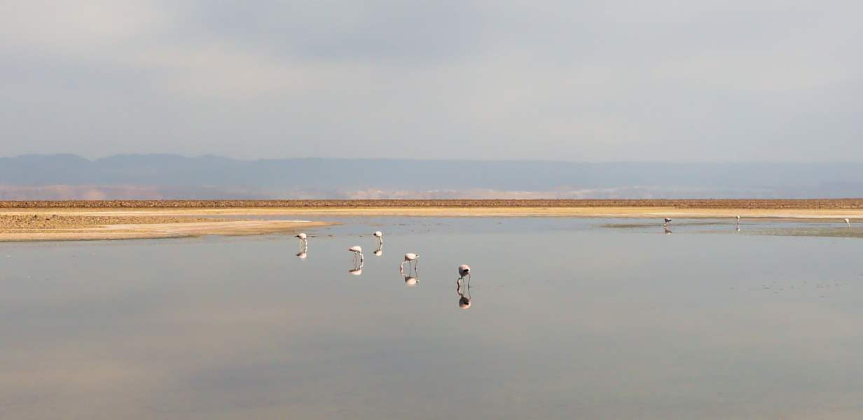 atacama salar chili los flamingos | Blog Vincent Voyage