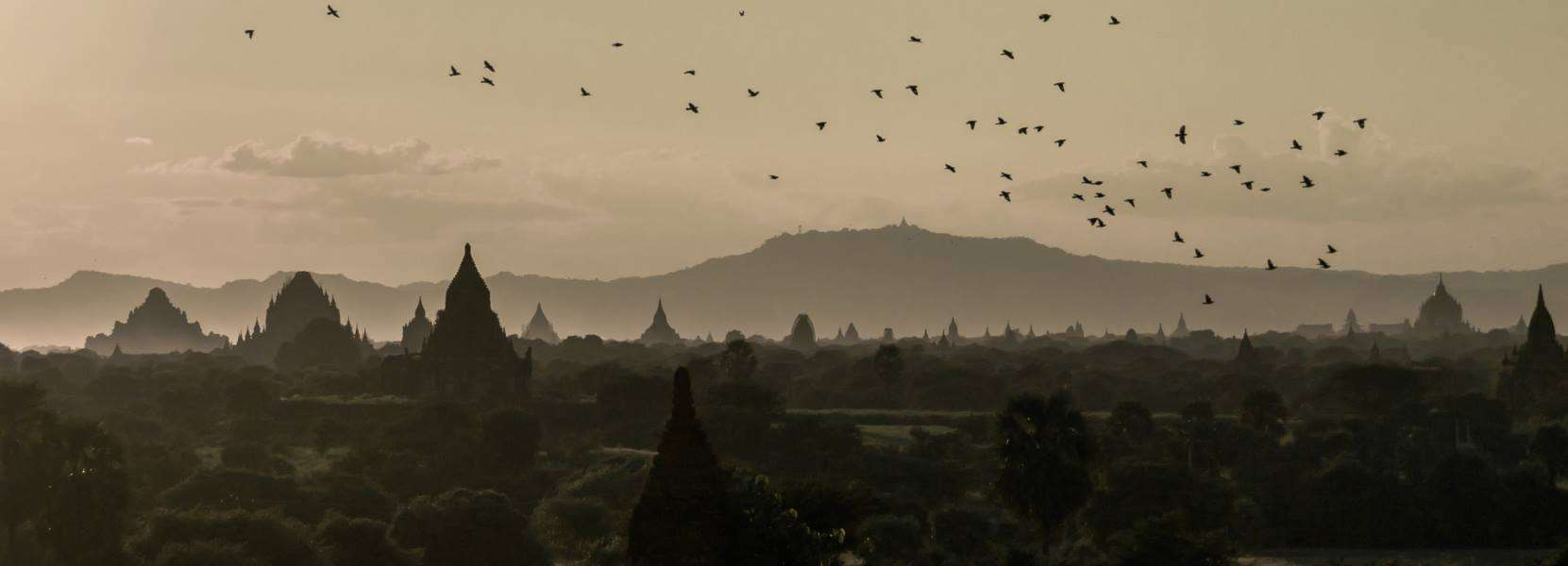 bagan myanmar birds